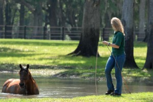 Sally Brett playing with horse in Florida