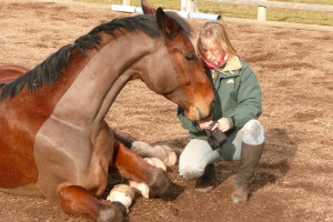 Lying down creating confidence using natural horsemanship in Shropshire