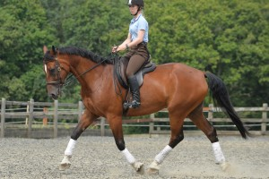 Sally Brett Lesson with Luis Lucio horsemanship with dressage