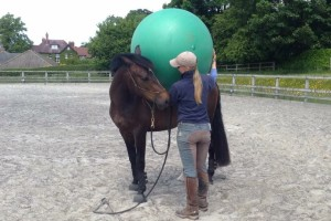 Sally Brett Helping a young horse gain confidence with new things using natural horsemanship