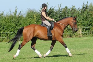 Sally Brett studying Dressage Naturally horsemanship