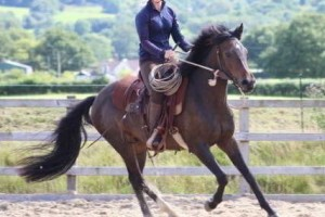 Cantering young horse using Natural Horsemanship