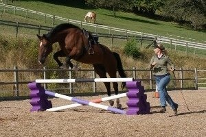 Sally Brett Liberty jumping using Natural Horsemanship at The Brandy House Powys
