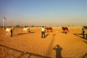 Sally Brett teaching horsemanship in Dubai