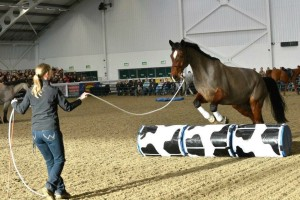 Parelli Natural Horsemanship demo - Aintree