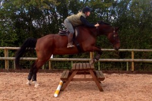 Sally Brett Practising jumping skills with natural horsemanship