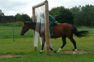 Sally Brett -Using horsemanship to help horses become confident with obstacles